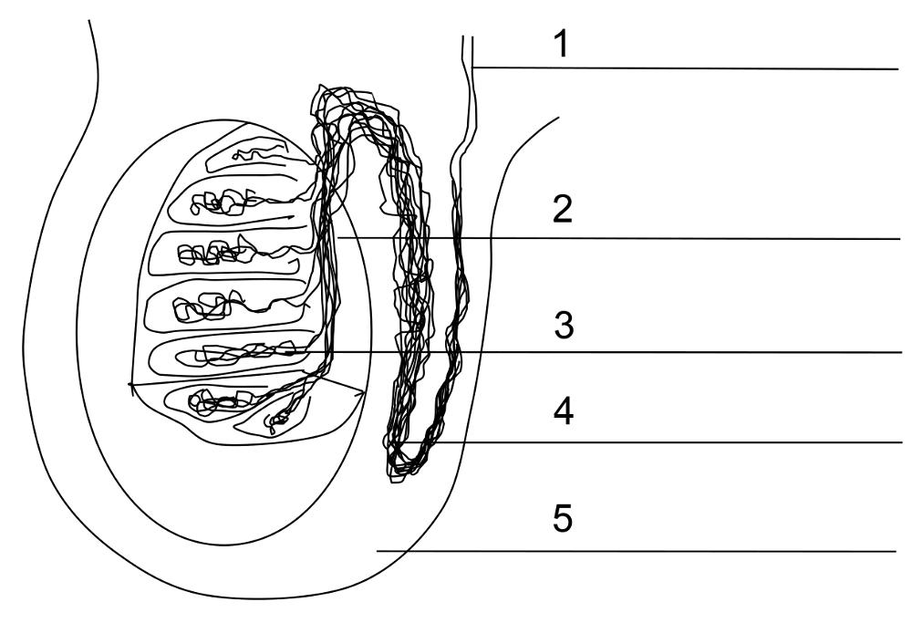 Freies Biologie-Lehrbuch für Schüler und Studenten