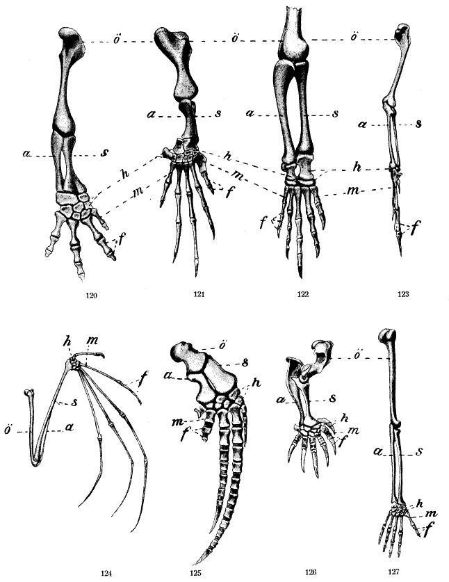 Großzügig Evolution Vergleichende Anatomie Fotos - Menschliche ...