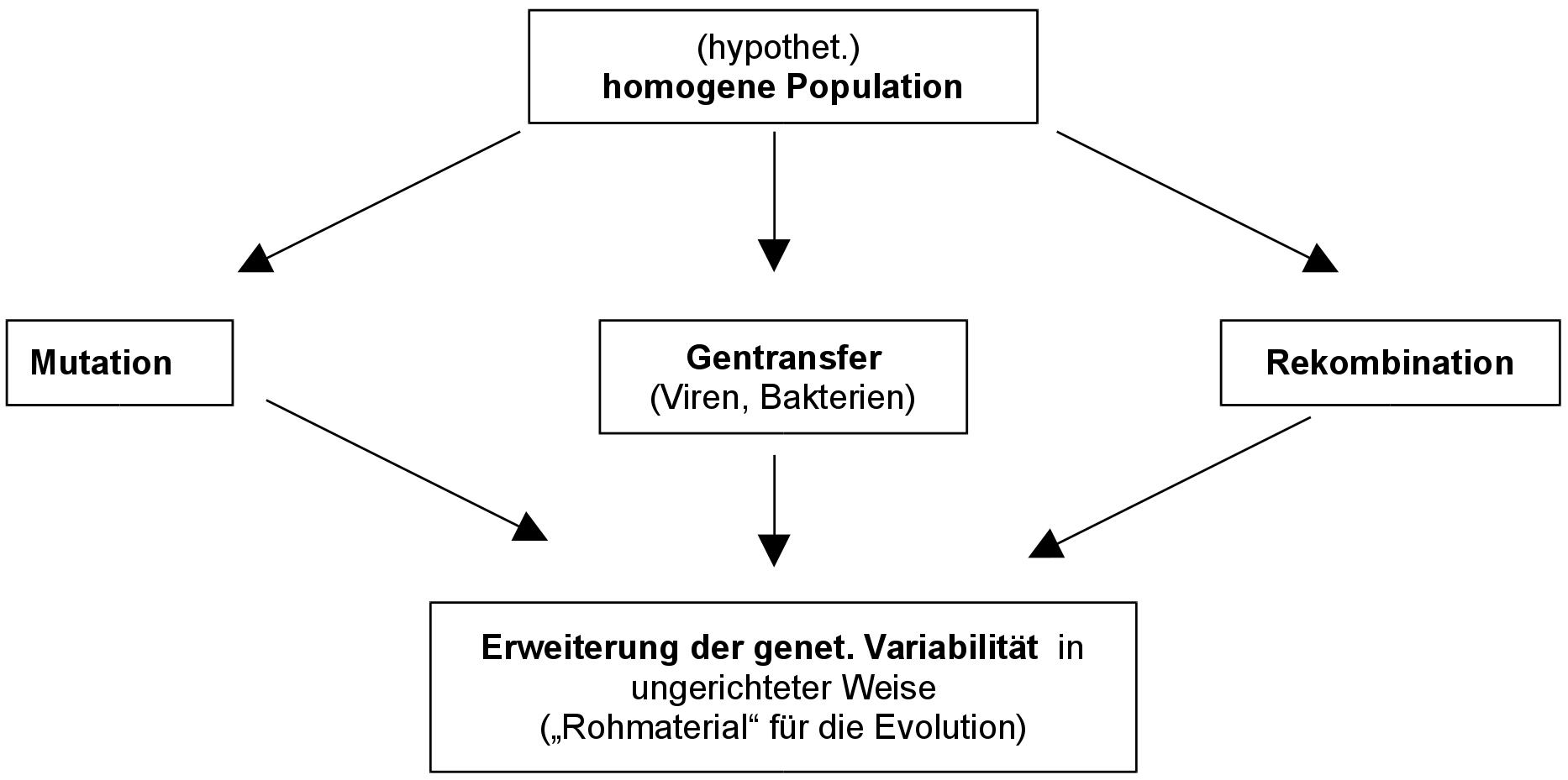 Mutation Rekombination